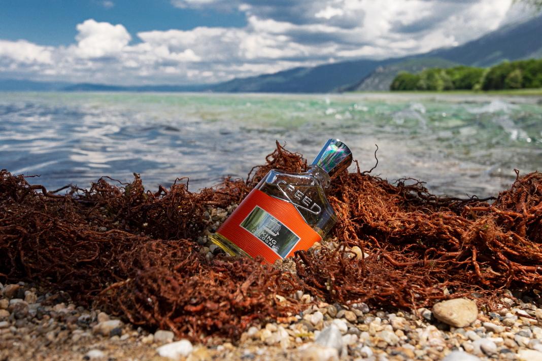 Creed Viking Cologne – Lake Ohrid - Photo: Boby Kjose